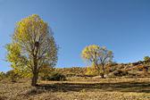 Utumn landscape — Stock Photo