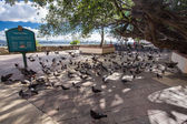 Gamla san juan puerto rico — Stockfoto