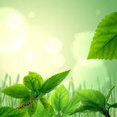 Verse bladeren, achtergrond — Stockfoto