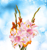 Gladiolus.Beautiful Bouquet — Stock Photo