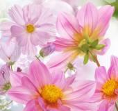 Flowers background.Springtime — Foto de Stock