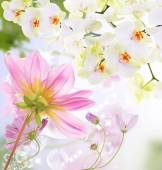 Flowers beautiful card — Stock Photo
