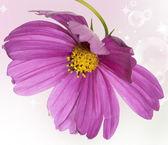 Pink beautiful flower closeup — Stok fotoğraf