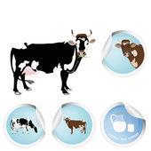 Cow.Milk.Bio dairy product — Stock Vector