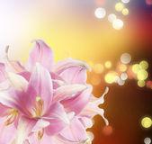 букет красивых цветов — Стоковое фото