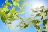 The beautiful nature background.Spring Time — Stock Photo