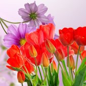 Beautiful garden fresh red tulips on abstract  background — Stock Photo