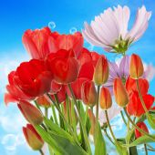 Beautiful  fresh red tulips on abstract spring nature background — Stock Photo