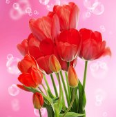 Fresh red tulips.Springtime — Stock Photo