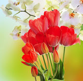 Fresh red tulips  and flowers orchid.Springtime — Stock Photo