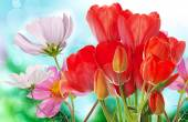 Beautiful  fresh  garden flowers on abstract spring nature backg — ストック写真