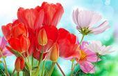 Beautiful  fresh  garden flowers  — Stock Photo