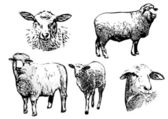 Sheep vector illustrations — Stock Vector