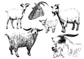 Goat vector illustrations — 图库矢量图片