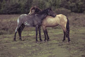 Side view of two horses hugging in field — Stock Photo