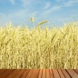 Timber surfase and ripe wheat ears against blue sky. — Stock Photo #70942065
