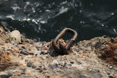 Rusty steel ring for mooring at berth at the sea — Stock Photo