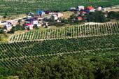 The village among vineyards — Stock Photo