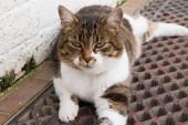 Кошка с зелеными глазами — Стоковое фото