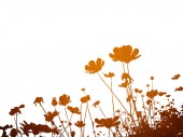 Resumo de flor — Foto Stock