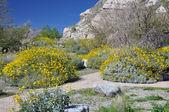 Springtime in the Desert — Stock Photo