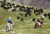 Stockriders with flock in Alay mountains on pastureland — Stock Photo