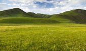 Green savanna mountain in Tibet - Qinghai province, China — Stock Photo