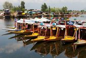 Shikara boats on Dal Lake with houseboats — Stock Photo