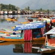 Shikara boats on Dal Lake with houseboats — Stock Photo #53521745