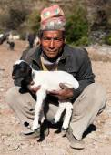 Herdsman with sheep with typical nepali hat on head  — Stock Photo