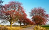 Chokeberry sokak sonbahar manzarası — Stok fotoğraf