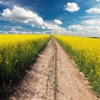 Country road across rape field — Stock Photo #54402241