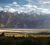 Nubra valley - Indian himalayas - Ladakh — Stock Photo
