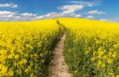 Field of rapeseed with rural road and beautiful cloud — Stock Photo