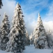 Beautiful wintry view of snowy wood on mountains — Stock Photo #63655829