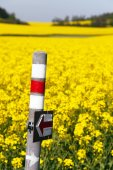 Golden flowering rapeseed field with tourist sign — Stock Photo