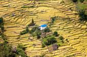 Terraced fields of paddy field and primitive small house — Stock Photo