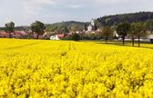 Golden field of rapeseed and Netin village — Stock Photo