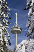 Radio tower in the winter with snow capped firs — Stock Photo