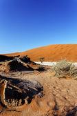 Beautiful landscape of Hidden Vlei in Namib desert  — Stock Photo