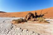 Sossusvlei beautiful landscape of death valley — Stock Photo