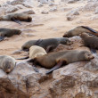 Huge colony of Brown fur seal - sea lions in Namibia — Stock Photo #62044545