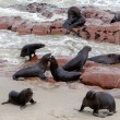 Huge colony of Brown fur seal - sea lions in Namibia — Stock Photo #62044565