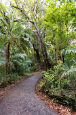 Pathway in a Park Victoria Falls, Zimbabwe in Spring — Stock Photo