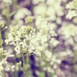Spring flower in garden with shallow focus vintage tone — Stock Photo #70891007