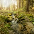 Falls on the small mountain river in a forest — Stock Photo #70891033
