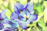 Watercolor illustration of trumpet gentiana blue spring flower — Stock Photo