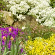 Spring garden with flower, shallow focus — Stock Photo #71922207
