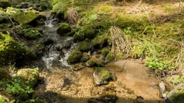 Falls on the small mountain river in a forest — Stockvideo