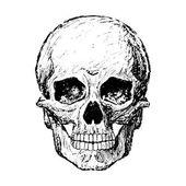 Drawing of a human skull — ストック写真